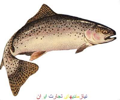 فروش ماهی پرواری صید شده و زنده قزل آلا