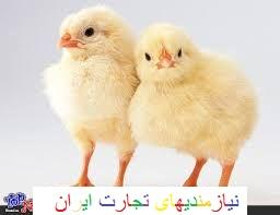 فروش جوجه مرغ گوشتی ،تخمگذار ،بومی و مرغ مادر